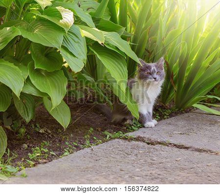 Domestic cat in morning garden under the leaves lit by the sunlight.