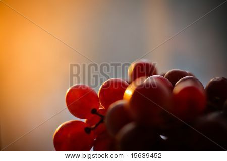 Bunch of grape fruit at sunset (autumn)