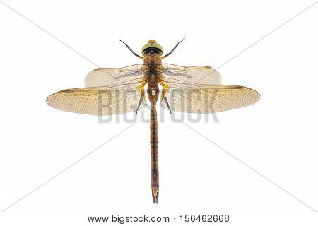 a dragonfly isolated on a white background