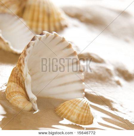 Lovely shells