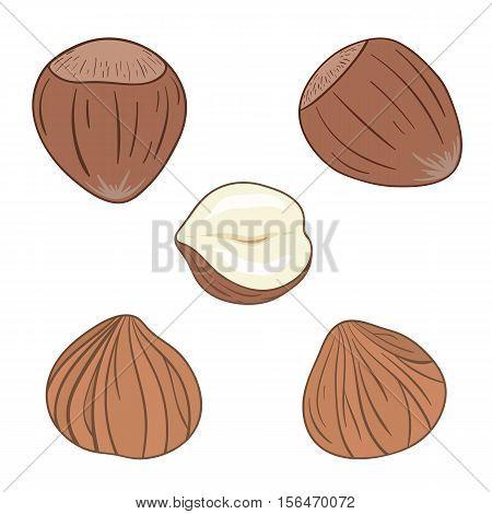 Set of hazelnuts, whole and shelled. Vector illustration.