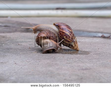 Snails are pests eat the leaves of trees for food in order to maintain ecological balance.