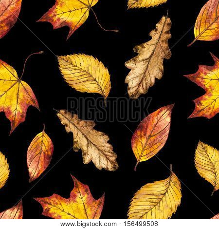 Seamless watercolor pattern of leaves oak, maple, elm, watercolour autumn background of yellow, orange and red leaf, hand painted botanical illustration for textile, wrapping paper, card, invitation