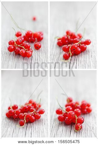 Cards Set of Red Currants Soft Focus