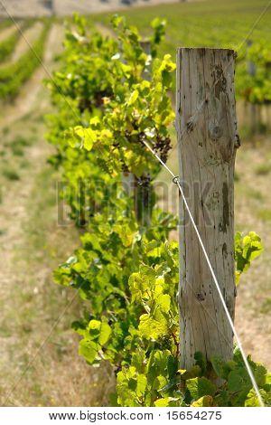 A Vine Post at Mclaren Vale, South Australia