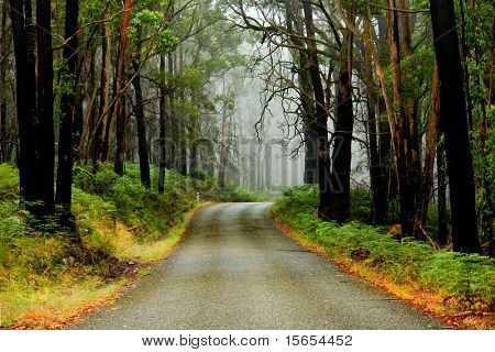 Misty road in the Grampians