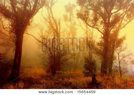 Sunrise on a foggy morning in the Grampians Forest