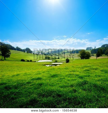 Gorgeous Rural Meadow on a summer day