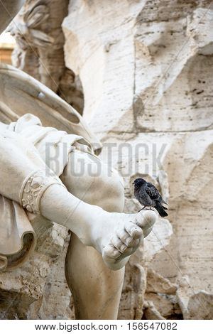 particular of the four river fountain in Navona square Rome with a bird on the fooot