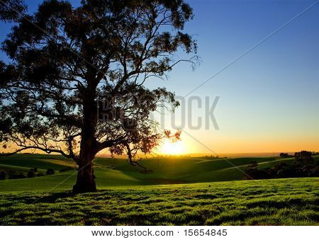 Beautiful Sunset over a rural meadow