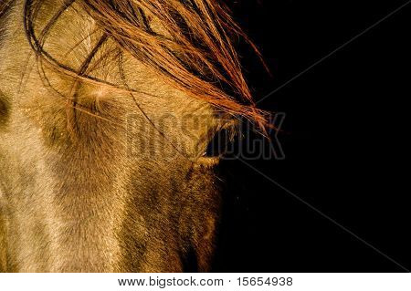 Closeup of a horse with copy space
