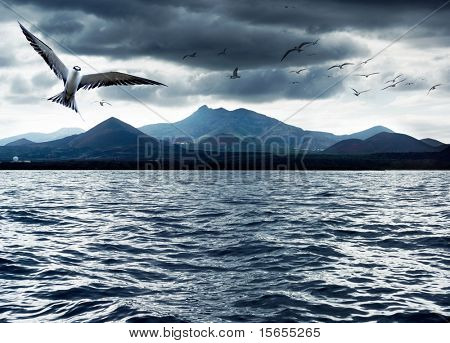 Sea birds with volcanic island in the background