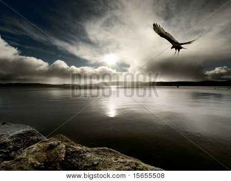 A bird flies over harbour at dusk