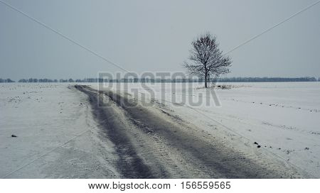 Road and lonely tree in gloomy winter