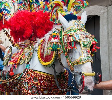 Closeup view of a horse head of a sicilian cart and its ornamental harness