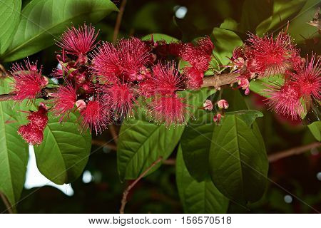 Tree Branch With Pink Flowers