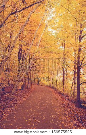 Autumn color, path with colourful autumn leaves