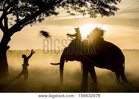 Silhouette Elephant Sunset. Mahout riding an elephant on the sunset. Elephant village in the north east of Thailand, beautiful relation between man and elephant. Life Shadow