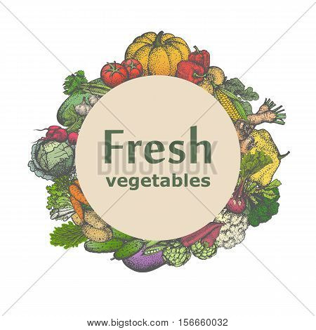 Vector illustration sign icon fresh vegetables. Badge, emblem juicy veggies. Picture, drawing isolated on white background. Vintage, retro style.