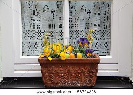 Garden / Pansy - beautiful summer flowers.