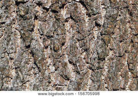 Tree bark texture wood bark texture closeup