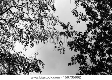 bottom view of silhouette black tree branches