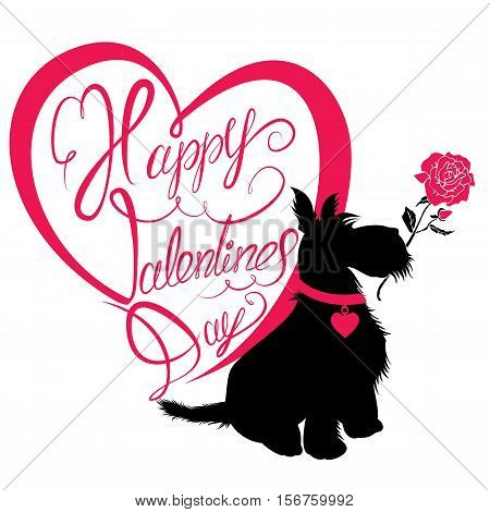 Holiday card. Calligraphic hand written text Happy Valentine`s Day in heart shape and scottish terrier dog silhouette with rose isolated on white background.