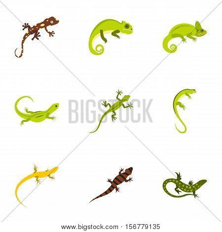 Types of iguana icons set. Flat illustration of 9 types of iguana vector icons for web