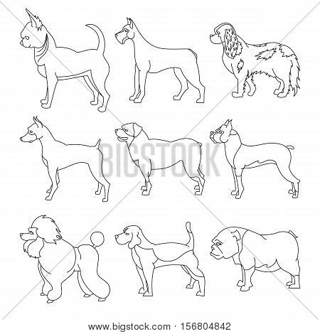 Set of purebred dogs in linear style. Bulldog and chihuahua, vector illustration