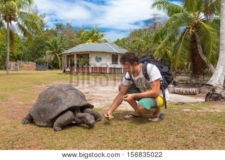 Male tourist feeding and admiring big old Aldabra giant tortoises, Aldabrachelys gigantea, in National Marine Park on Curieuse island, close to Praslin on Seychelles.