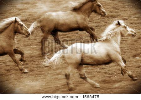 Galloping Herd Of Horses