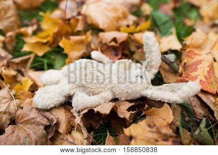 season, childhood and loneliness concept - lonely toy rabbit in fallen autumn leaves