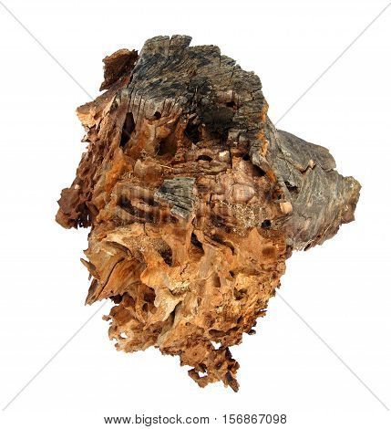 Old decaying tree stump isolated on a white background