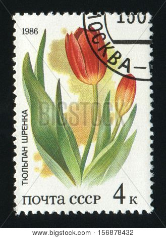 USSR - CIRCA 1986: A post stamp printed in USSR shows image of Tulip with the inscription Tulip schrenki circa 1986.