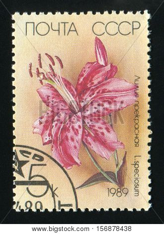 USSR - CIRCA 1989: A post stamp printed in the USSR shows a Japanese Lily Lilium speciosum circa 1989.