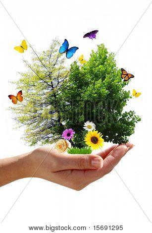 Eco-Konzept