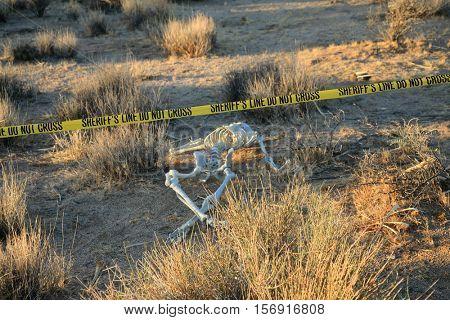 Crime Scene. Skeleton partially buried in dirt in a desert. Forensic Crime Scene. Murder Scene. CSI Investigation.