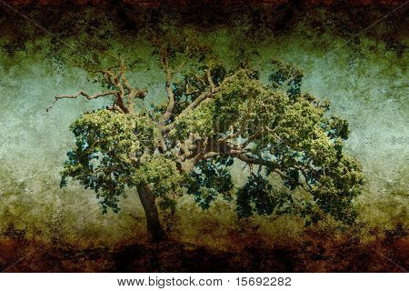 textured old saturated grungy paper with oak tree