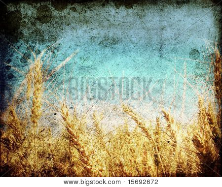 Grungy distressed photo of a wheat field