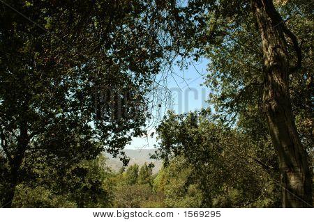 Shady Oak Grove 185