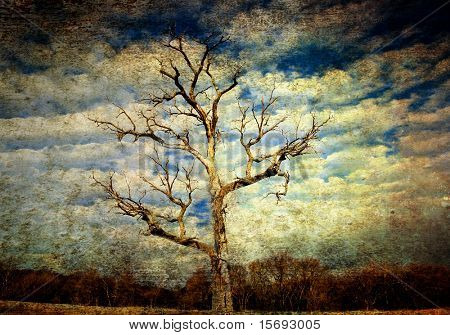 Textured old grungy tree background image