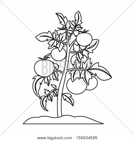 Tomato icon in outline style isolated on white background. Plant symbol vector illustration.