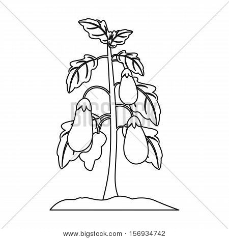 Eggplant icon in outline style isolated on white background. Plant symbol vector illustration.