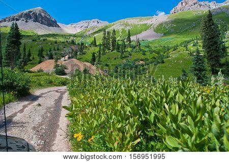 Chicago Basin Summer Mountain Landscape high in the Colorado Rocky Mountains Near Telluride , Colorado
