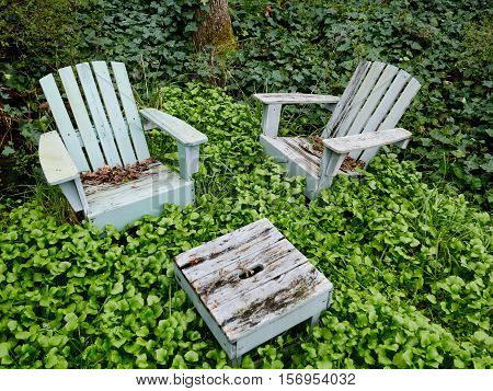 Wooden chairs in a overgrown garden surrounded by weeds and ivy. Everything green.