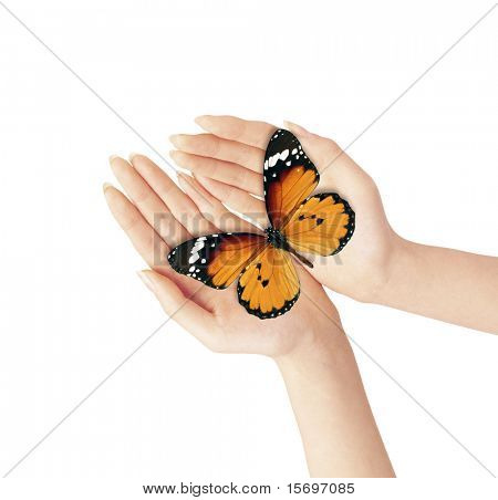 Hands holding a blue butterfly against a white background