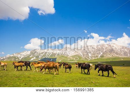 Wild horses walking on the mountain landscape
