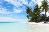 picture of tropical plants  - Beautiful tropical beach with palms - JPG