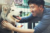 Young Asian Male Dog Owner Playing And Touching The Happy Husky Siberian Dog Pet With Love And Care poster