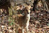 Calf of deer. cute deer. confused poster